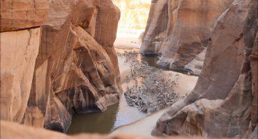 Kamele in Ennedi-Massiv