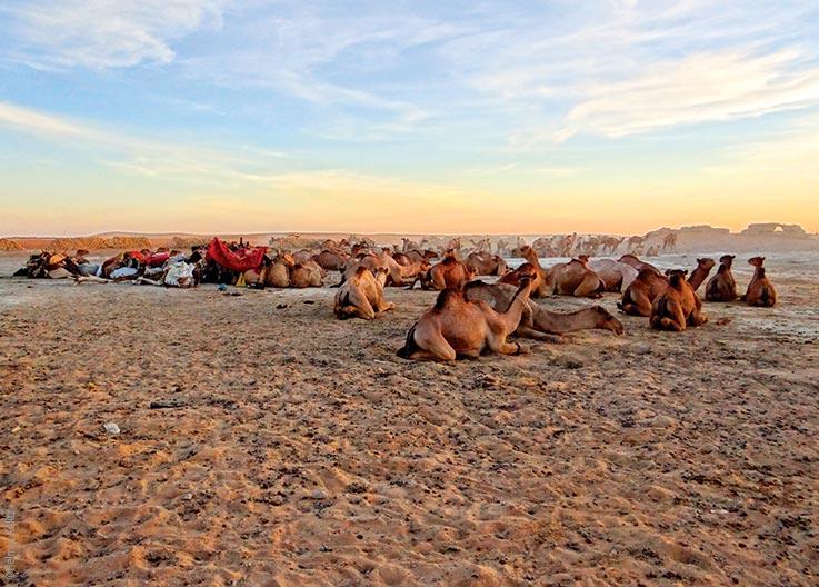 Das Ennedi Massiv, Kamelmarkt, Explore Chad