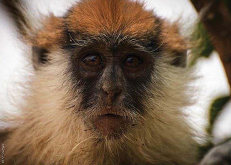 Das Ennedi Massiv, Affen im Garten Eden der Sahara, Explore Chad