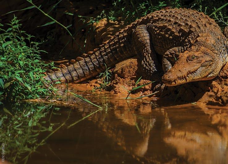 The Ennedi Massif, crocodiles in the Sahara's Garden of Eden, Explore Chad