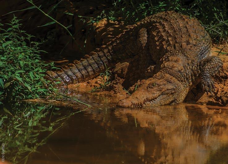Das Ennedi Massiv, Krokodile im Garten Eden der Sahara, Explore Chad