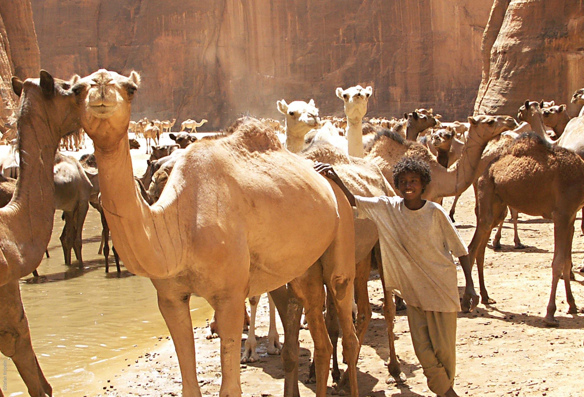 Das Ennedi Massiv, Schlucht mit Wasserlauf, Kamelherde und Junge, Explore Chad