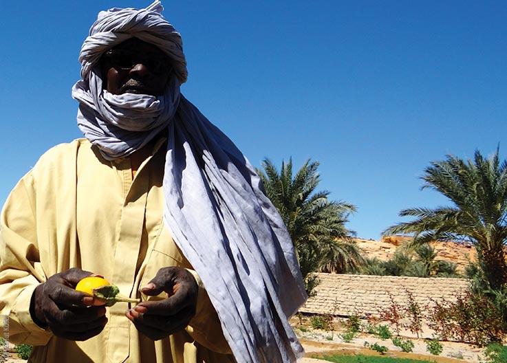 Die Seen von Ounianga, Gemüseanbau, Explore Chad