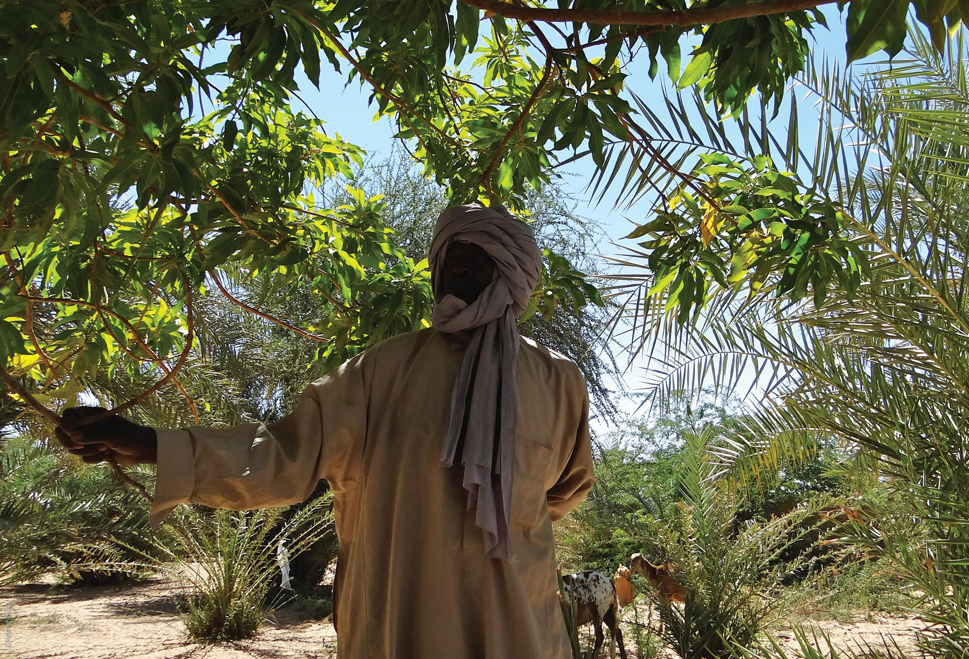 Die Seen von Ounianga, Oase und Bewohner, Explore Chad
