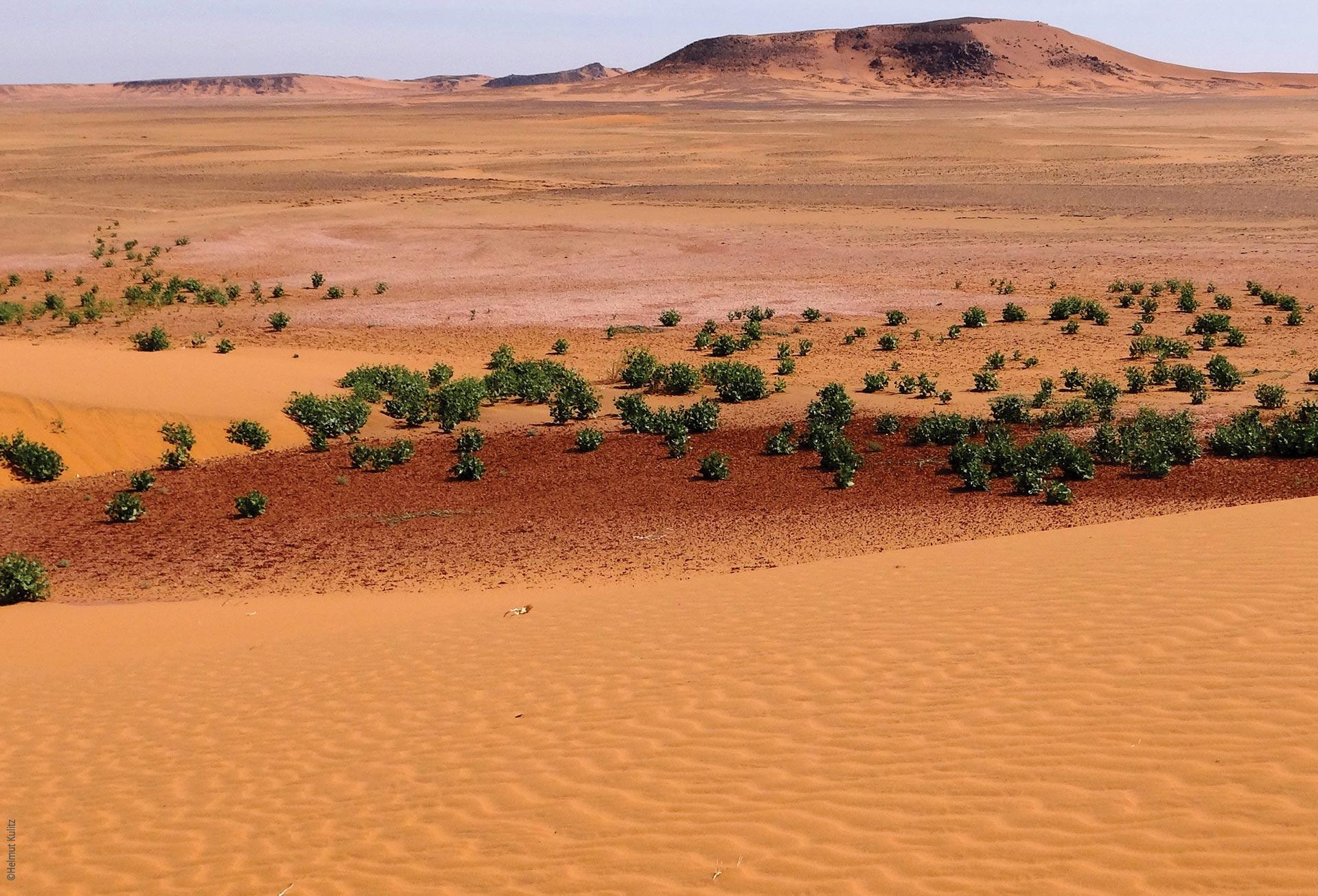 Forschungen und Expeditionen im Norden des Tschad, Blick in die Wüste, Explore Chad